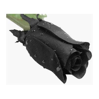 The black rose elite unique nouveau perspectives for Do black roses really exist
